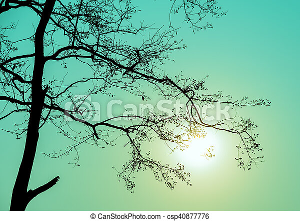 Silhouette tree branch in green background - csp40877776