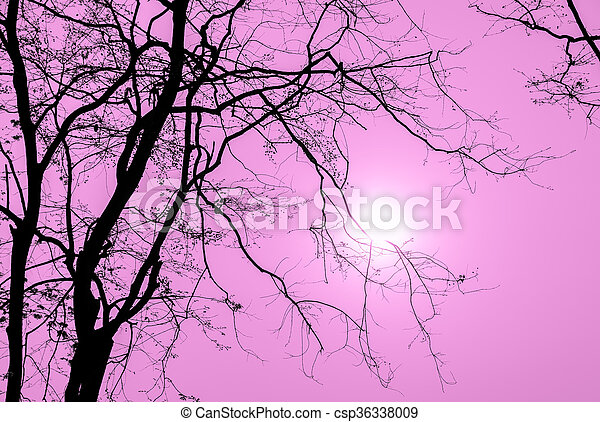 Silhouette tree branch in pink background - csp36338009