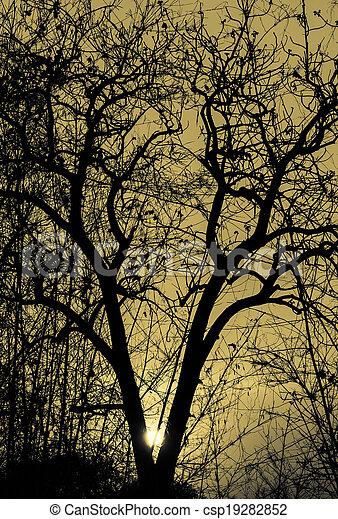 Silhouette tree - csp19282852
