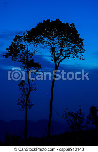 Silhouette tree sunset or sunrise on mountain with blue sky background - csp69910143