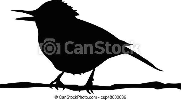 silhouette, uccello, ramo - csp48600636