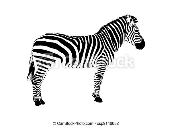 silhouette, zebra - csp9148852