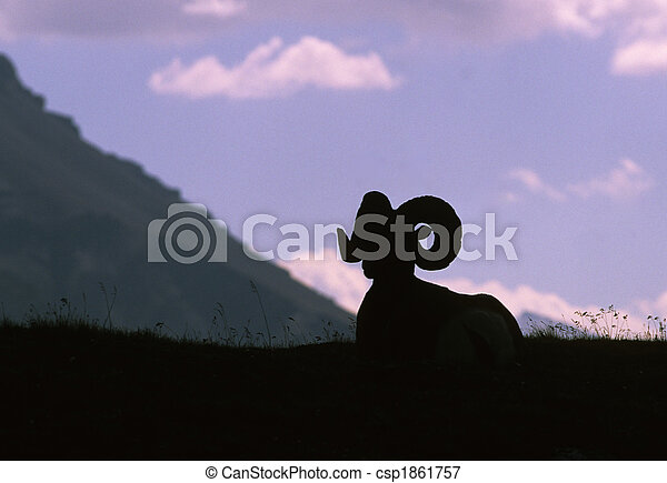 Silhouetted Bighorn Ram - csp1861757