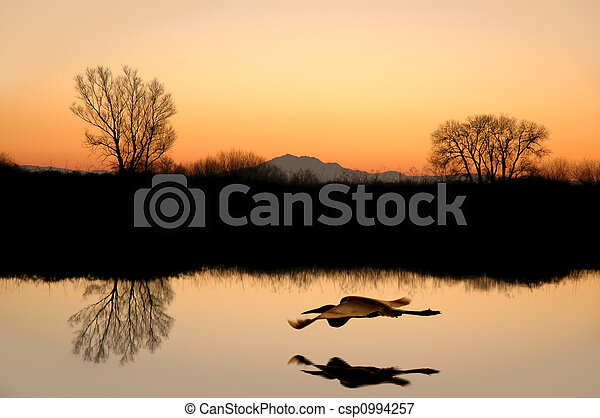 Silhouetted Tree Reflections - csp0994257