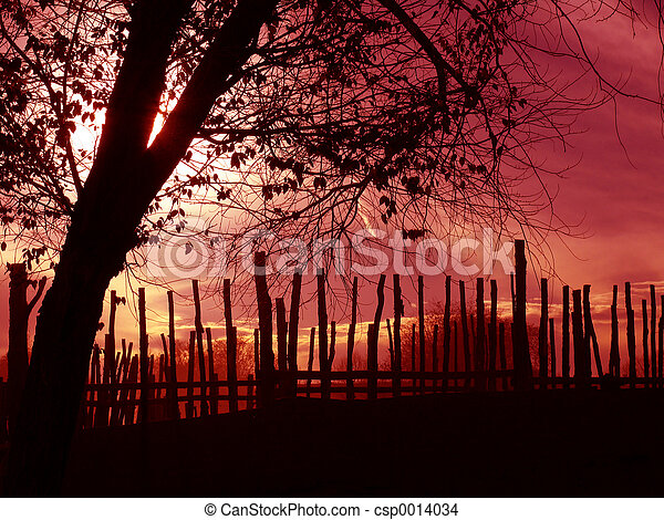 Silhouetted Tree - csp0014034