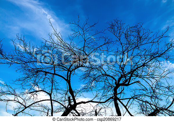 Silhouettes of dead trees. - csp20869217
