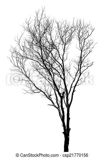 Silhouettes of dead trees. - csp21770156