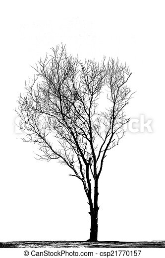 Silhouettes of dead trees. - csp21770157