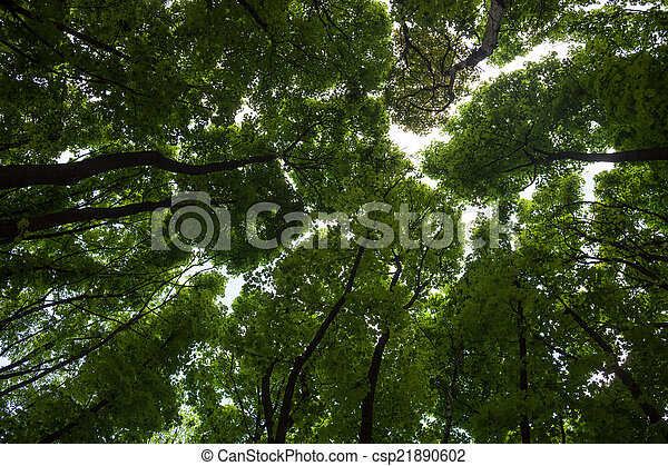 Silhouettes of green maple treetops - csp21890602