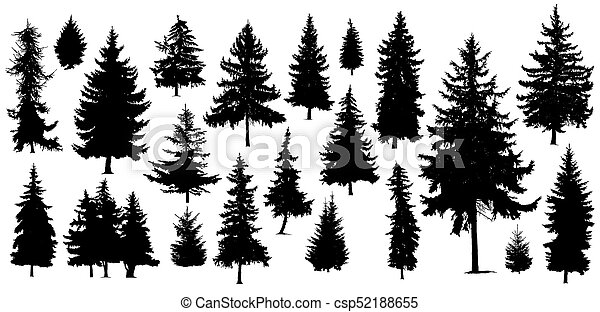 silhouettes of pine trees - csp52188655