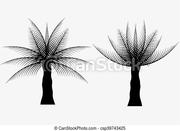 silhouettes of the coconut trees - csp39743425