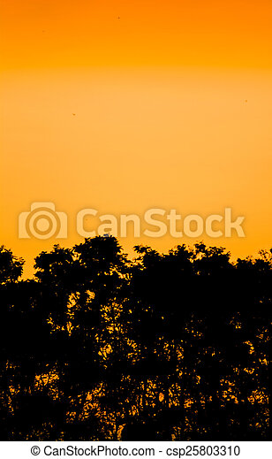 Silhouettes of trees and forest after the sunset - csp25803310
