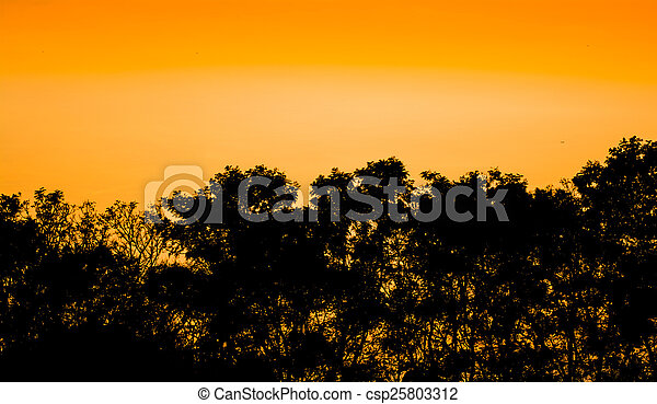 Silhouettes of trees and forest after the sunset - csp25803312