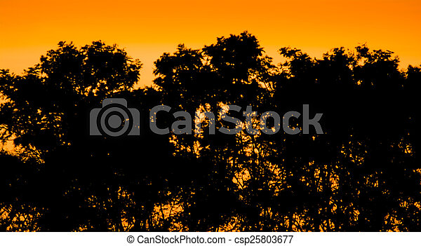 Silhouettes of trees and forest after the sunset - csp25803677
