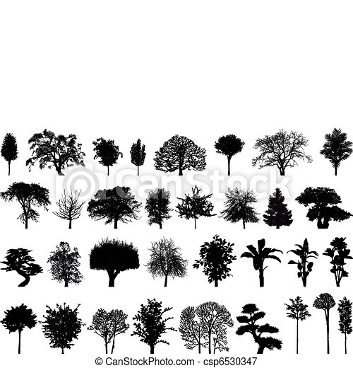 Silhouettes of trees  - csp6530347