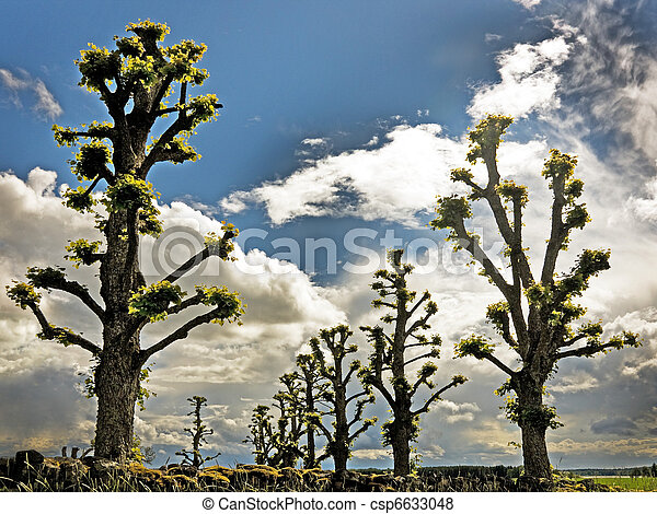 Silhouettes of trees - csp6633048