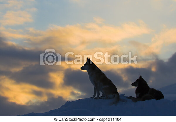 Silhouettes of two wolves (dogs) - csp1211404