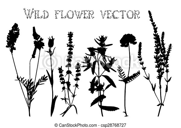 Line Drawing Flower Vector : Silhouettes of wild flowers and leaves vector. set vector