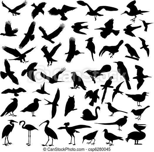 silhouettes, oiseaux - csp6280045