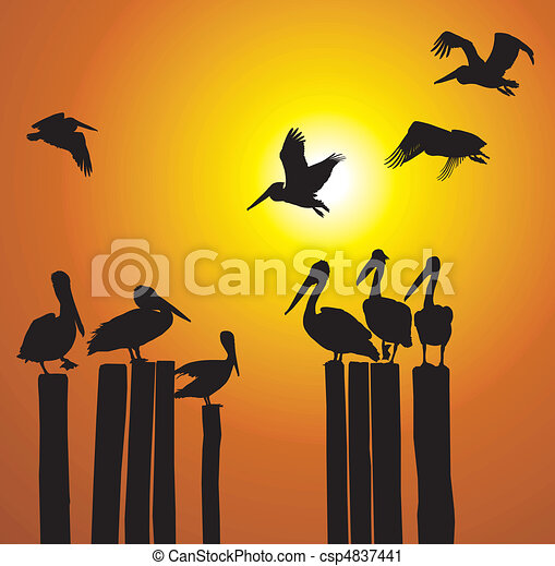 Silhouettes pelicans and sunset - csp4837441
