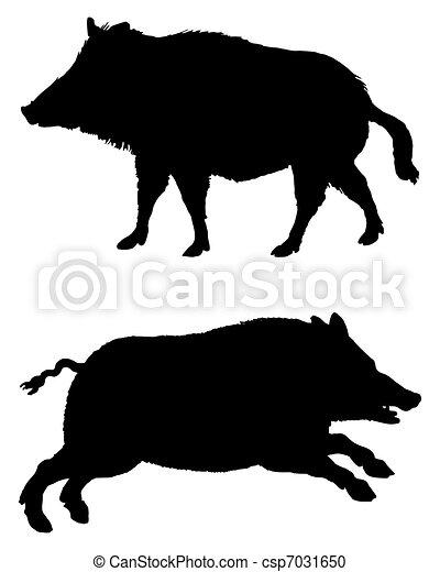 silhouettes, sangliers, blanc, noir, deux - csp7031650