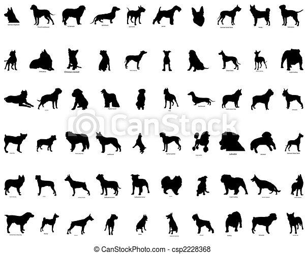 silhouettes, vecteur, chiens - csp2228368