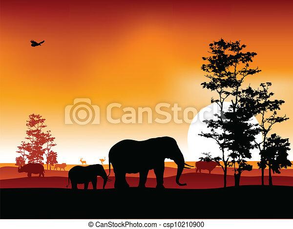 silhouettte of animal wildlife - csp10210900