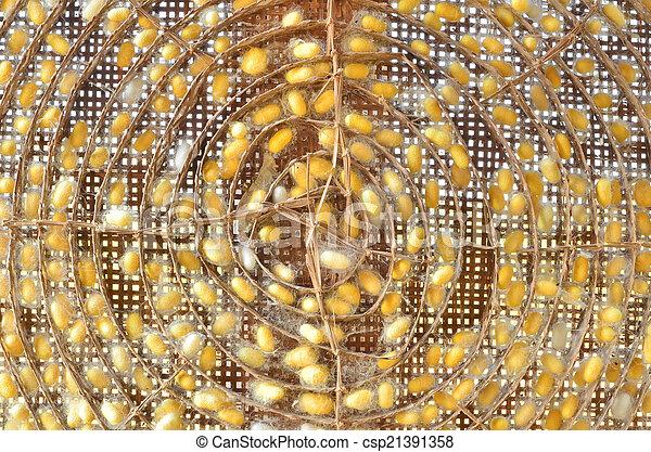 silkworm cocoon - csp21391358