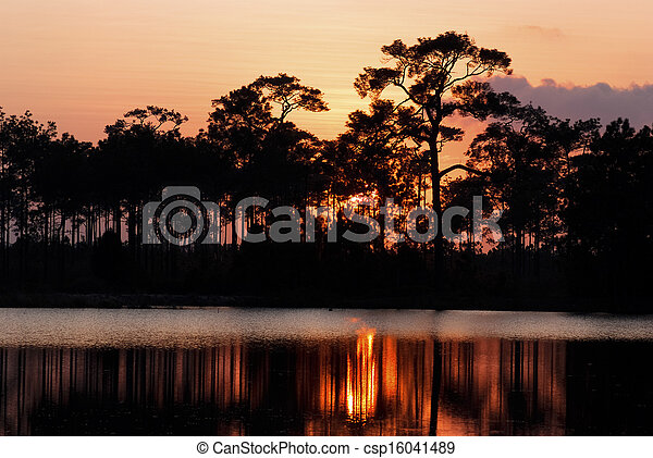 Sillouette of pine trees - csp16041489