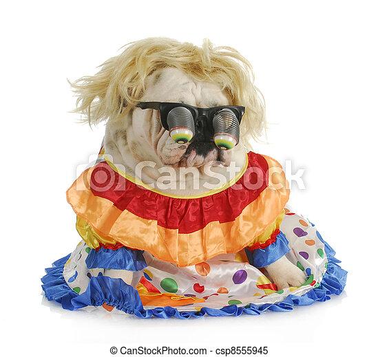 silly dog - csp8555945