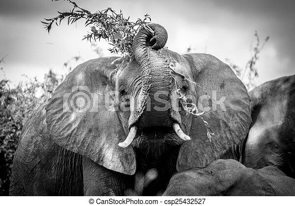 Silly Elephant - csp25432527