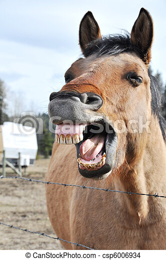 Silly Horse - csp6006934