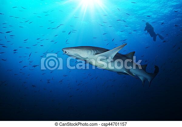 Tiburón con silueta de buzo - csp44701157
