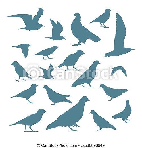 Siluetas de aves - csp30898949