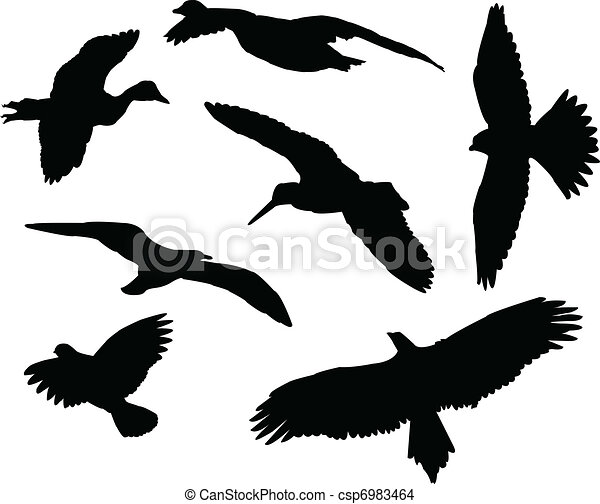 Pájaros siluetas - csp6983464