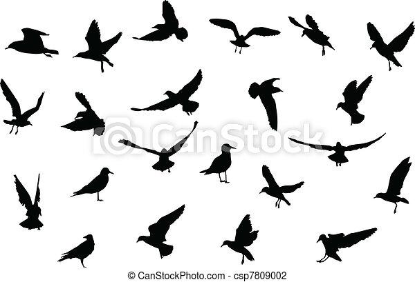 Pájaros siluetas - csp7809002