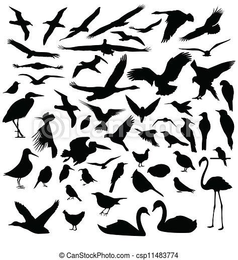 Siluetas de pájaro - csp11483774