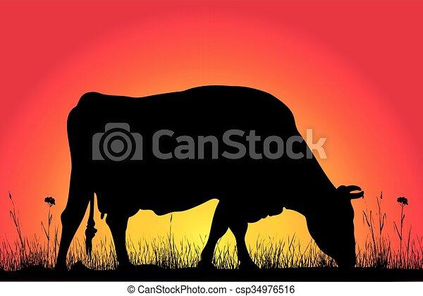 Siluetas de vaca - csp34976516