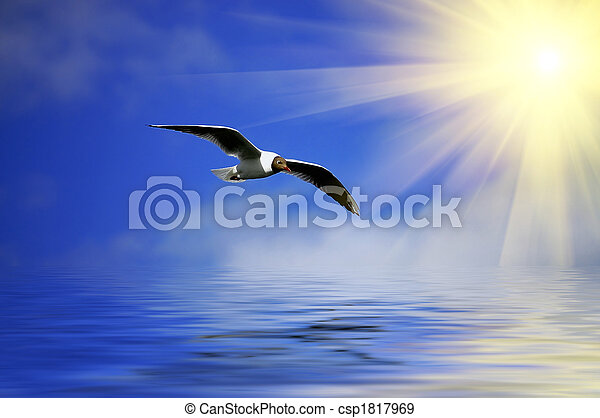Silver Blue sky and flaying seagull - csp1817969