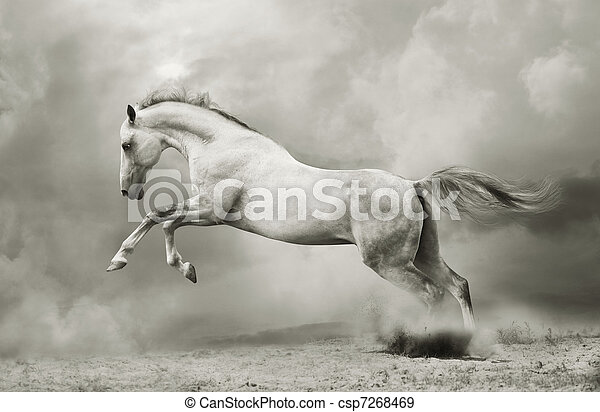 silver-white stallion on black - csp7268469