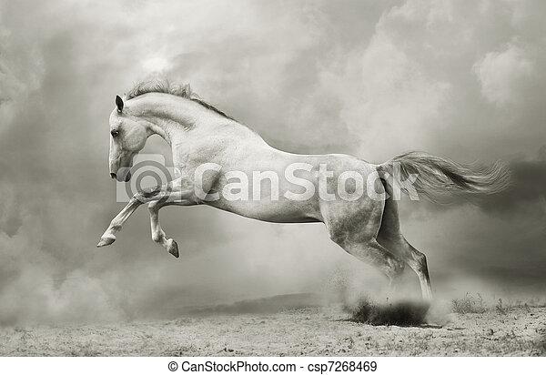 silver-white stallion on black - csp7268469