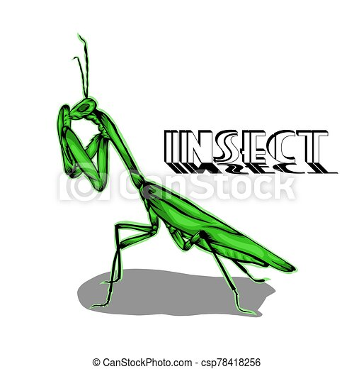 Simple Design Of Illustration Praying Mantis Insect On White