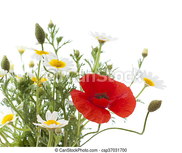simple posy of Poppy and garland chrysanthemums - csp37031700