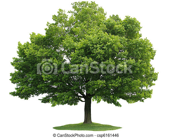 singel, träd - csp6161446