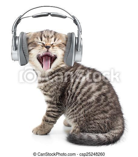 Singing funny cat or kitten in headphones listening music - csp25248260