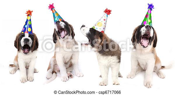 Singing Saint Bernard Dogs Celebrating - csp6717066