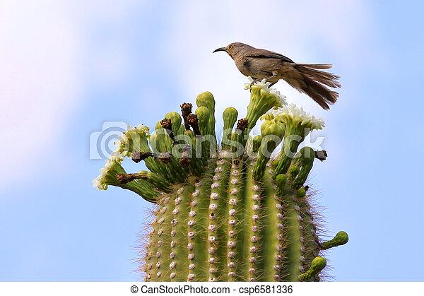 Single bird on Cactus - csp6581336