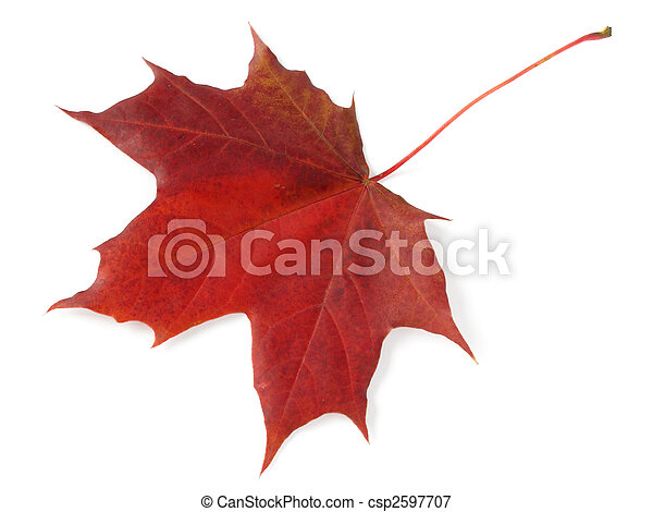 single maple leaf - csp2597707