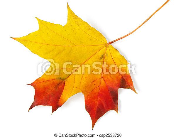 single maple leaf - csp2533720