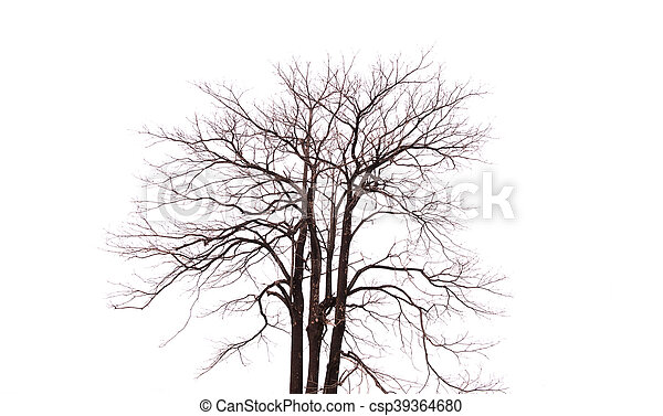 Single old and dead tree isolated on white background - csp39364680